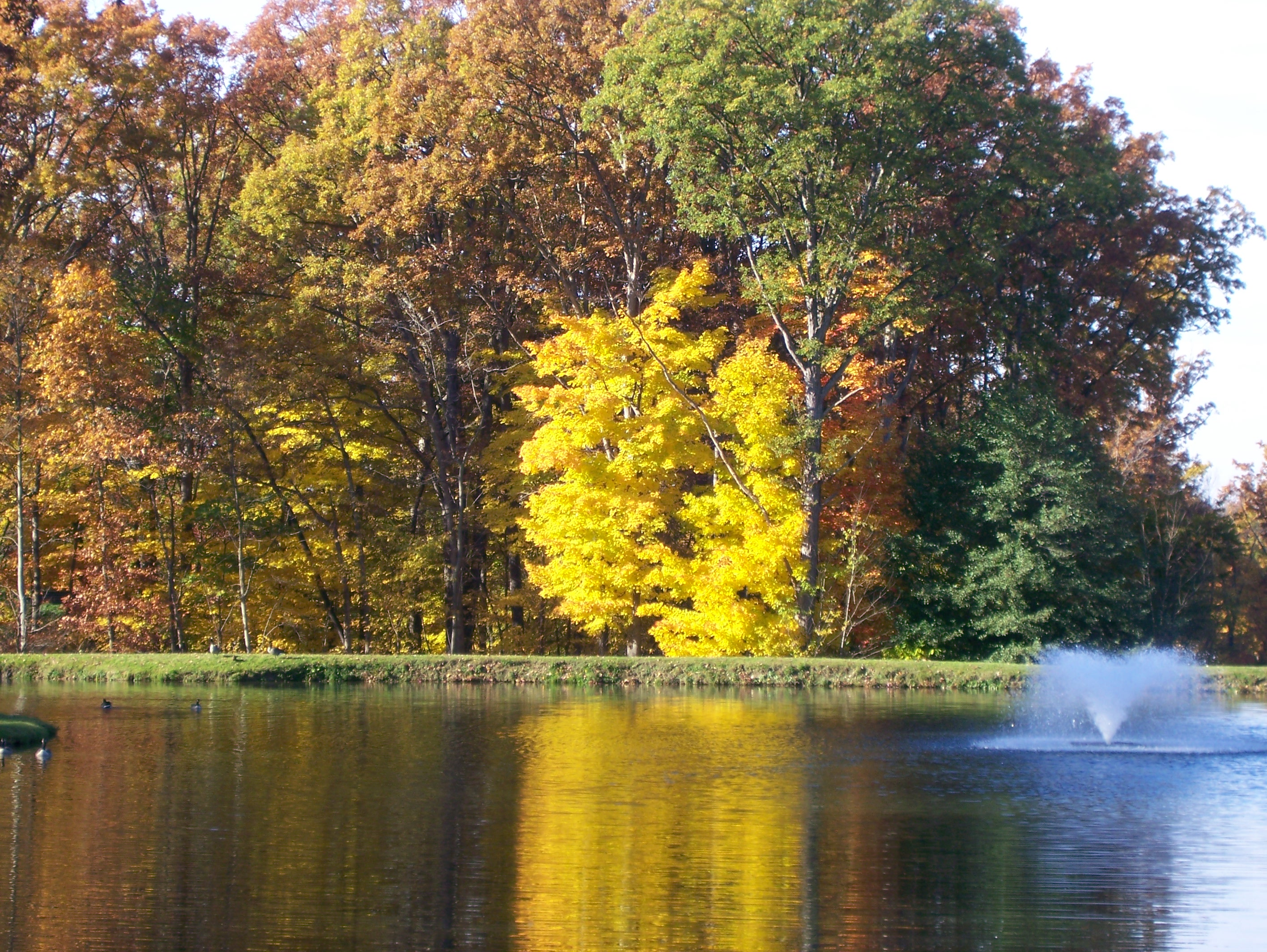 Lake-fall-yellow-tree